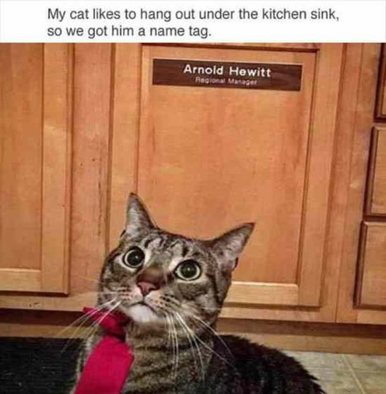 Funny Animal Pictures