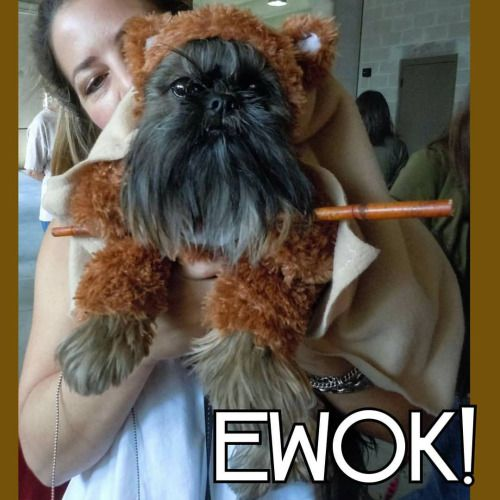Best 25+ Ewok dog costume ideas on Pinterest | Funny dog ...
