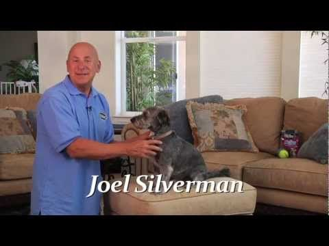 With the help of Joel Silverman, teaching your dog to lie down will be a piece of cake! #DogTrainingTips #HappyDogs #DogTricks