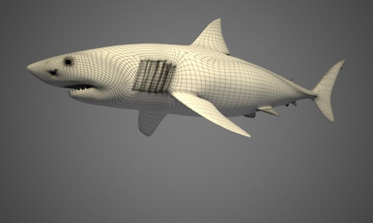 White Shark - Wireframe - 3D Graphic Software: Maya