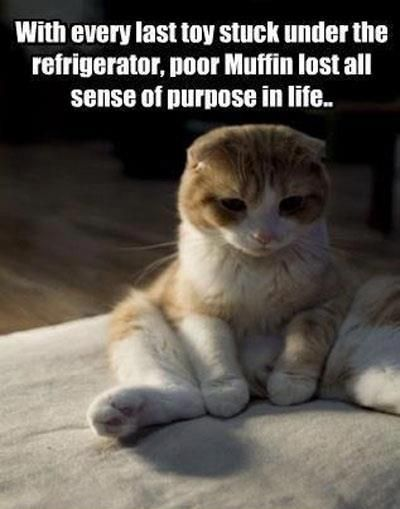 Poor Muffin!  Maggie feels for her!     www.juliekenner.com/the-cats-fancyPoor Muffins, Couch, Dogs, Funny Cat, Funny Pictures, Funny Photos, Funny Animal, Kitty, Cat Toys