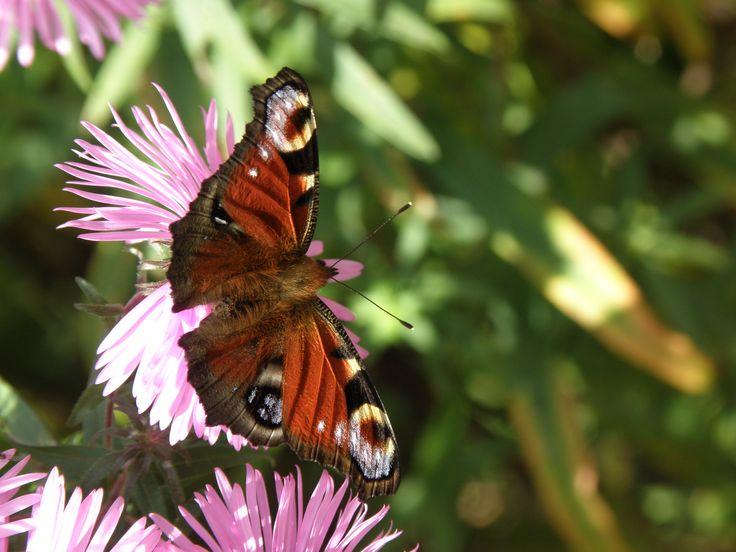 бабочка от грусти