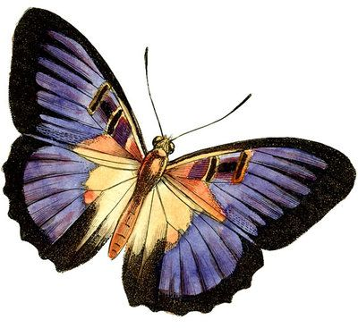 butterfly clip art   Purple Butterfly Clipart by HauntingVisionsStock