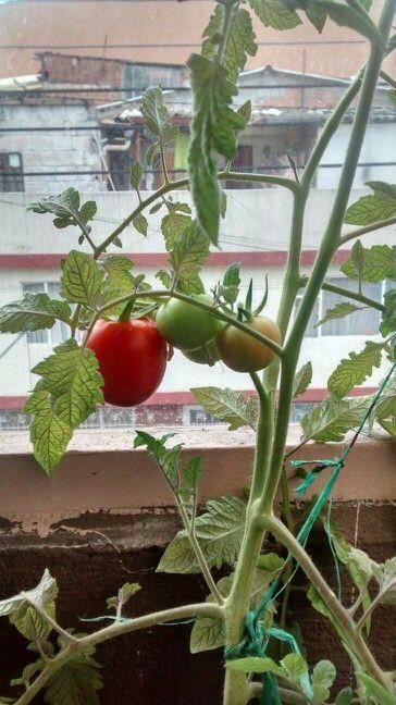 Cultivo casero