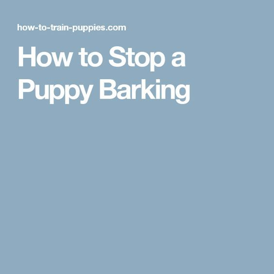 How to Stop a Puppy Barking