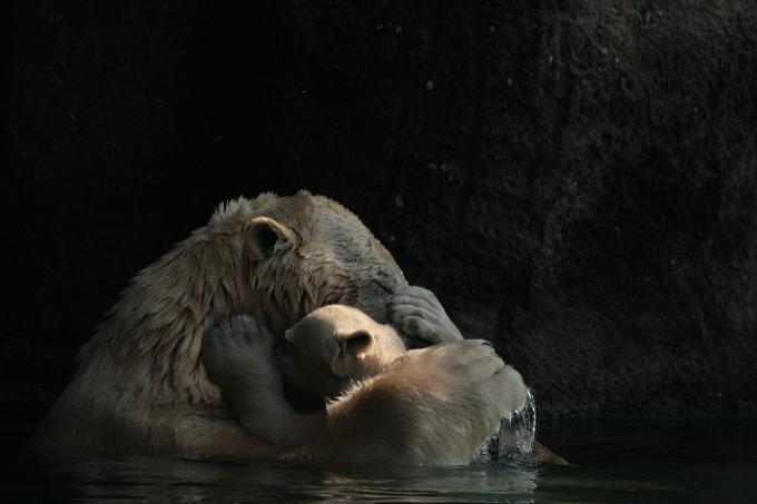 Oh ik hou van deze foto.....Ze houden veel van elkaar!!