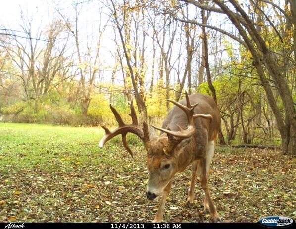 49 best images about trail cam pics on pinterest a deer motion detector and two harbors. Black Bedroom Furniture Sets. Home Design Ideas