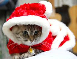 christmas costumes for cats - Google Search