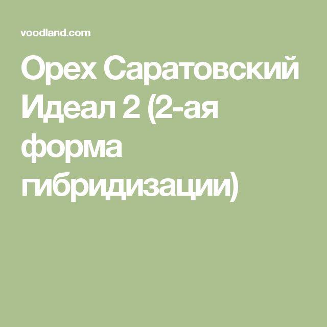 Орех Саратовский Идеал 2 (2-ая форма гибридизации)