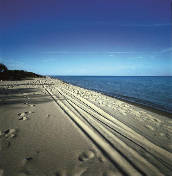 La bella stagione si avvicina e ci torna in mente, inevitabilmente, il mare della Puglia. Che ne dite di sognare con noi una passeggiata sulle spiagge del litorale di #Ginosa Marina?  Trasformare il sogno in realtà è facile: #MyPugliaExperience è qui: www.mypugliaexperience.com/sharefb.php