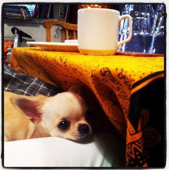 Pikku Lilli piilossa :-)