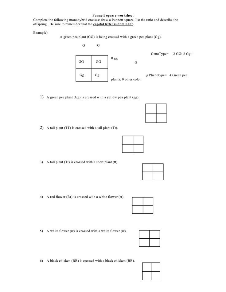 punnett-square-worksheet by kpolson via Slideshare