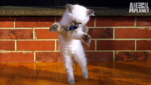 Too Cute! Kittens | Too Cute | Animal Planet
