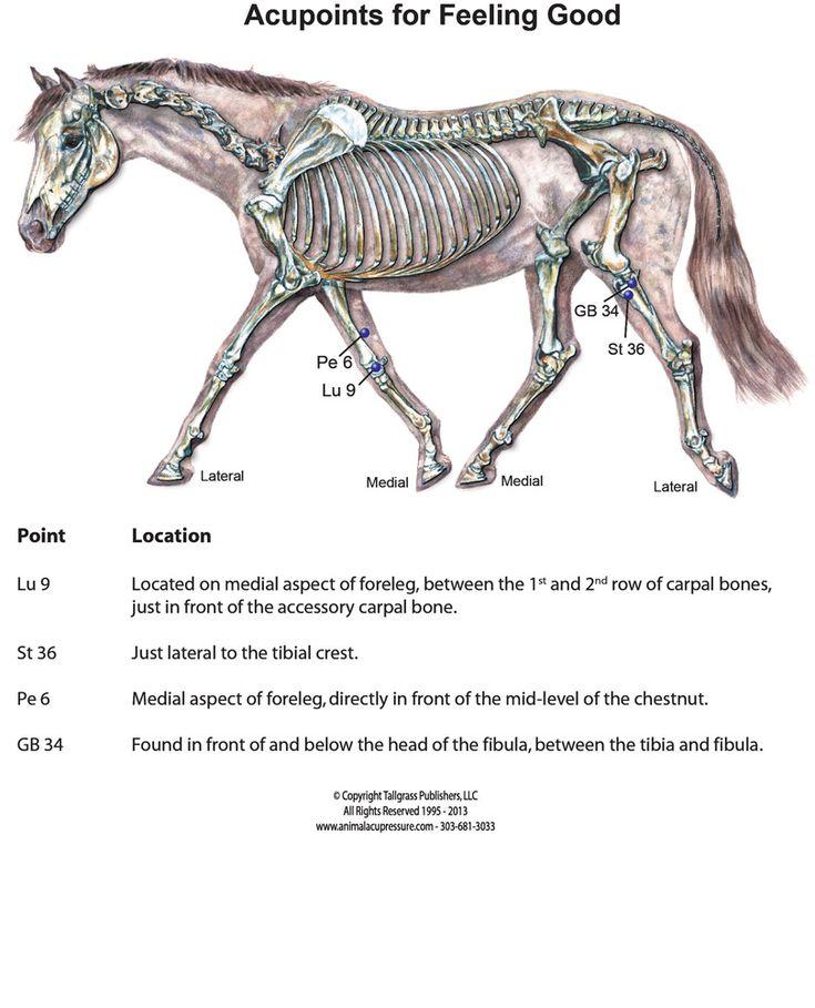 731 besten cheval Bilder auf Pinterest   Pferde, Anatomie und ...