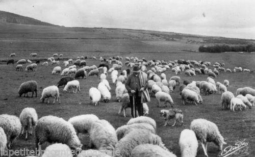 carte-postale-ancien-berger-troupeau-moutons-LAuvergne-ANDRE-vieux-metier-CPA