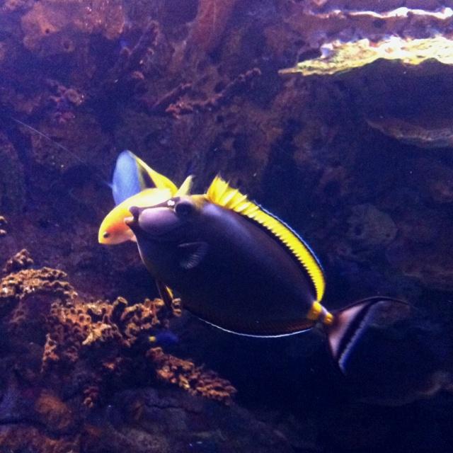 Blond Fish