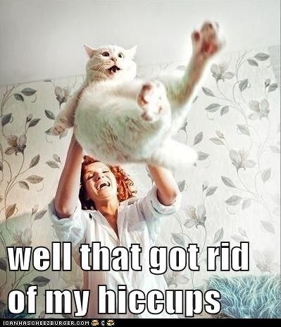 Yep, it sure would!: Funny Cat, Funny Pictures, The Faces, Fat Cat, Funny Stuff, Cat Faces, Crazy Cat Lady, Poor Tiddl, Cat Memes