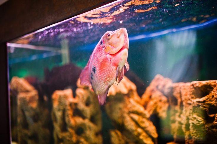 Fische Aquarium Einrichtungsbeispiele
