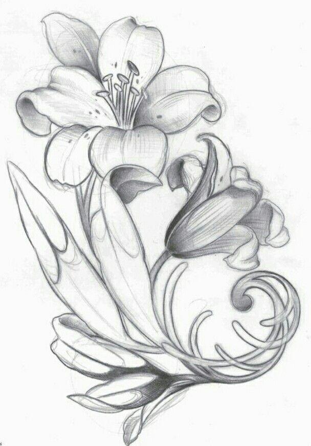 Лилии рисунок