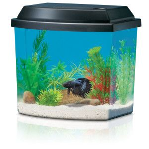 1000 images about national geographic on pinterest for Betta fish tanks petsmart