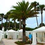 Palm Trees for Sale | Buy Palm Tree at Low Prices