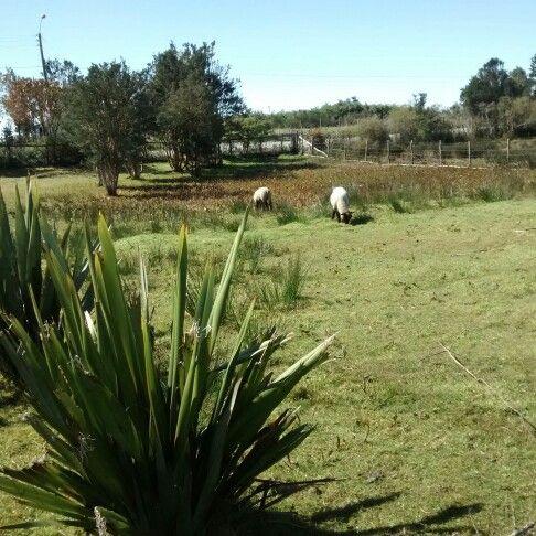 Lliuco, Quemchi, Chiloe, Chile