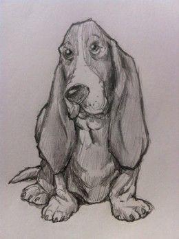 How to Draw a Basset Hound Dog