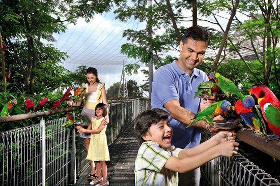Here, you'll meet our Australian natives, the friendliest birds at the Park.
