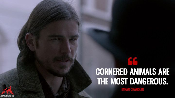 Cornered Animals Are The Most Dangerous Ethan Chandler Penny