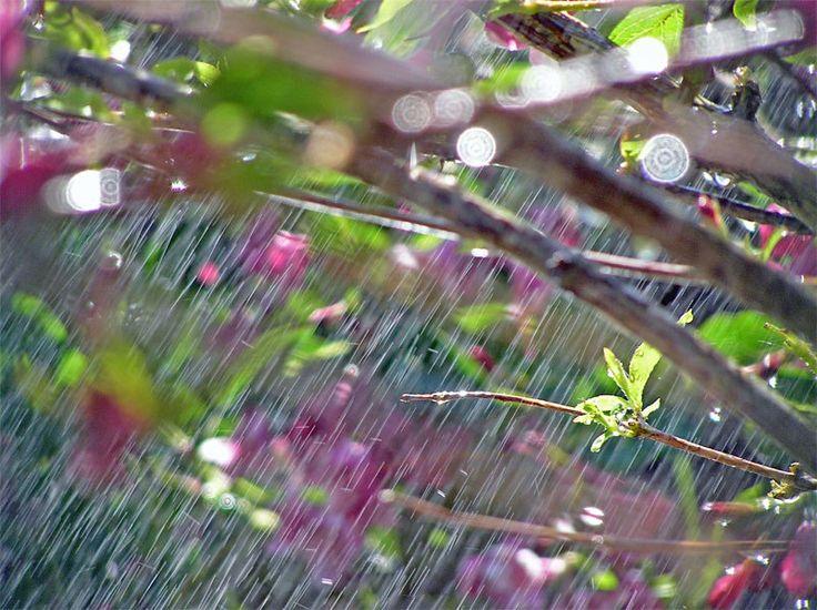 новую картинки дождь весной в городе круглые попки