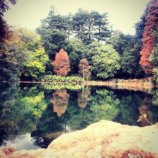 Rhodes Park, Kensington, Johannesburg, Jozi, South Africa/ ZA