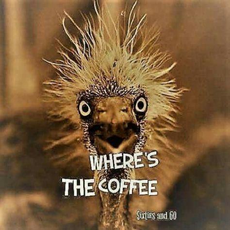 Ummmm... LOL! #coffeelovers #MorningCoffee