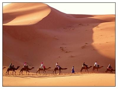 The Sand Dunes at SAM