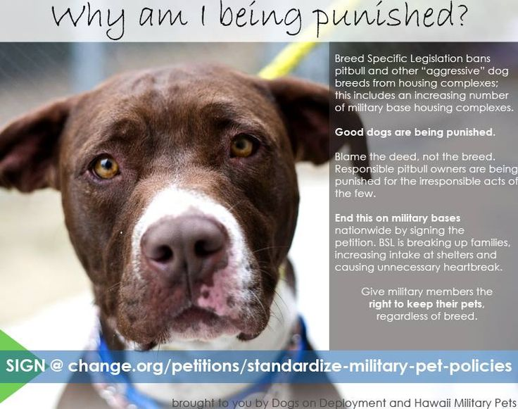 151 best Animal Rights Petitions, Stop Animal Cruelty Petitions - importance of petition