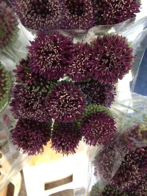 Allium 'Amit'...Sold in bunches of 10 stems from the Flowermonger the wholesale floral home delivery service.
