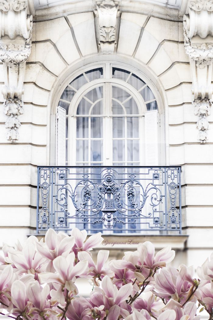 Fleurs de magnolia à Paris