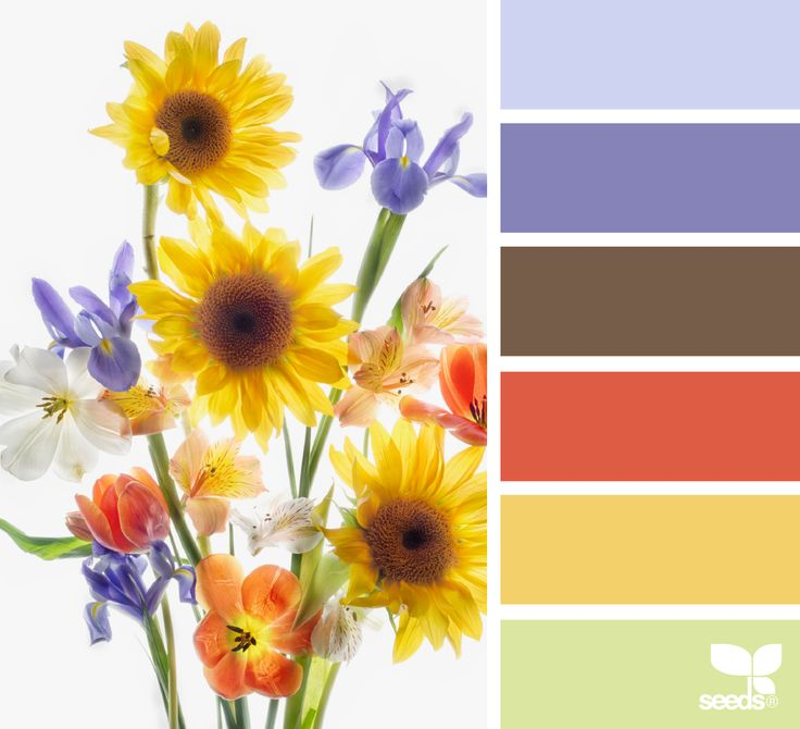 Flora Brights - https://www.design-seeds.com/in-nature/flora/flora-brights-3
