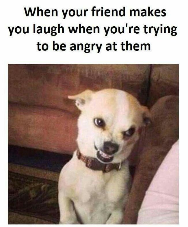 How To Make Your Friend Laugh : friend, laugh, Friend, Makes, Laugh, You're, Trying, Angry, Them., Share, Friends., #quotes…, Funny, Animal, Jokes,, Memes,, Memes