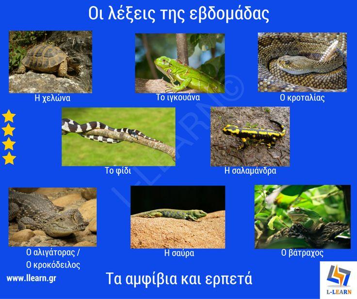 Amphibians and reptiles. Τα αμφίβια και τα ερπετά.  #λέξεις #Ελληνικά #ελληνική #γλώσσα #λεξιλόγιο #Greek #words #Greek #language #vocabulary #LLEARN