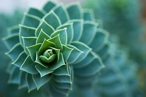 Fractal geometry in nature