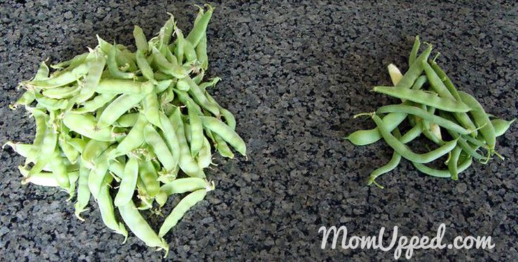 Snow pea and green bean harvest from the home garden.  http://www.momupped.com/growing-veggies.html