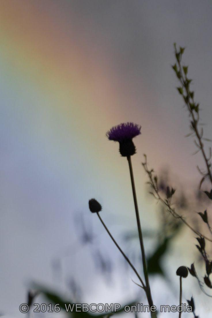 Ook mooie foto's op je website? Kijk op: https://www.webcomp.nl/?start=fotos   #natuur #plant #bloem #milieu #milieuorganisatie #natuurorganisatie #natuurbehoud #natuurbeheer #flora #online #media #foto #video #website #webdesign