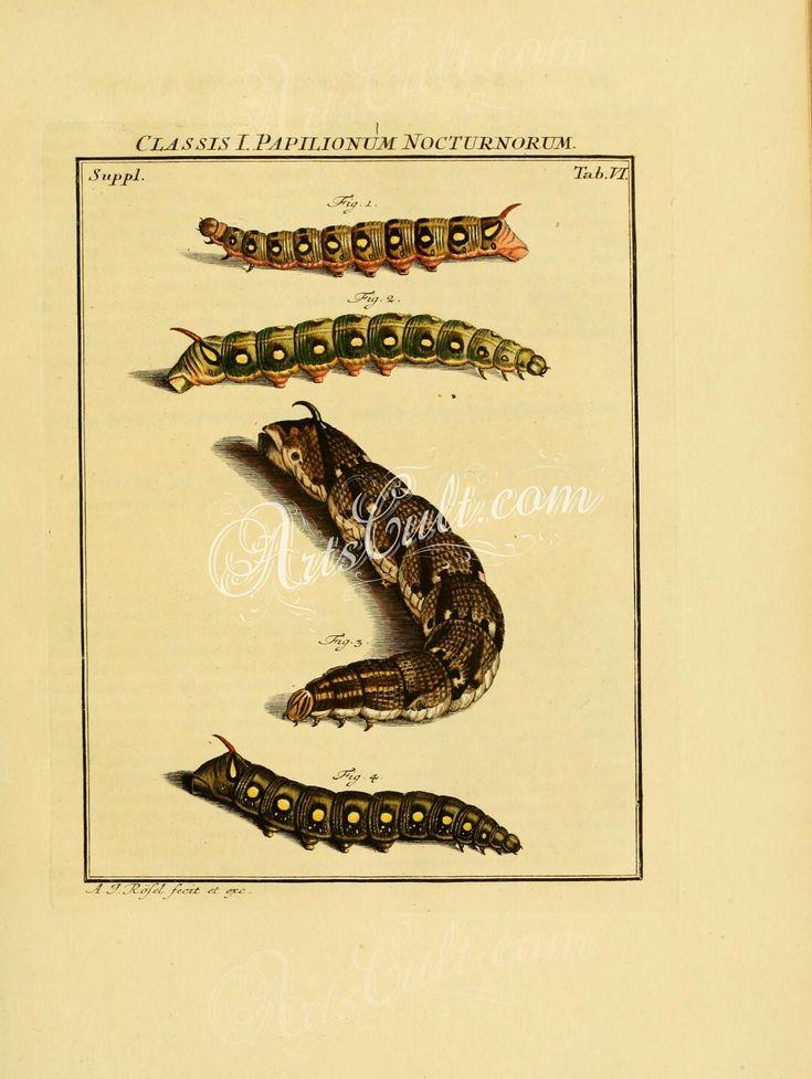 006-opatrum, tenebrio, serropalpus, helops, pimelia      ...