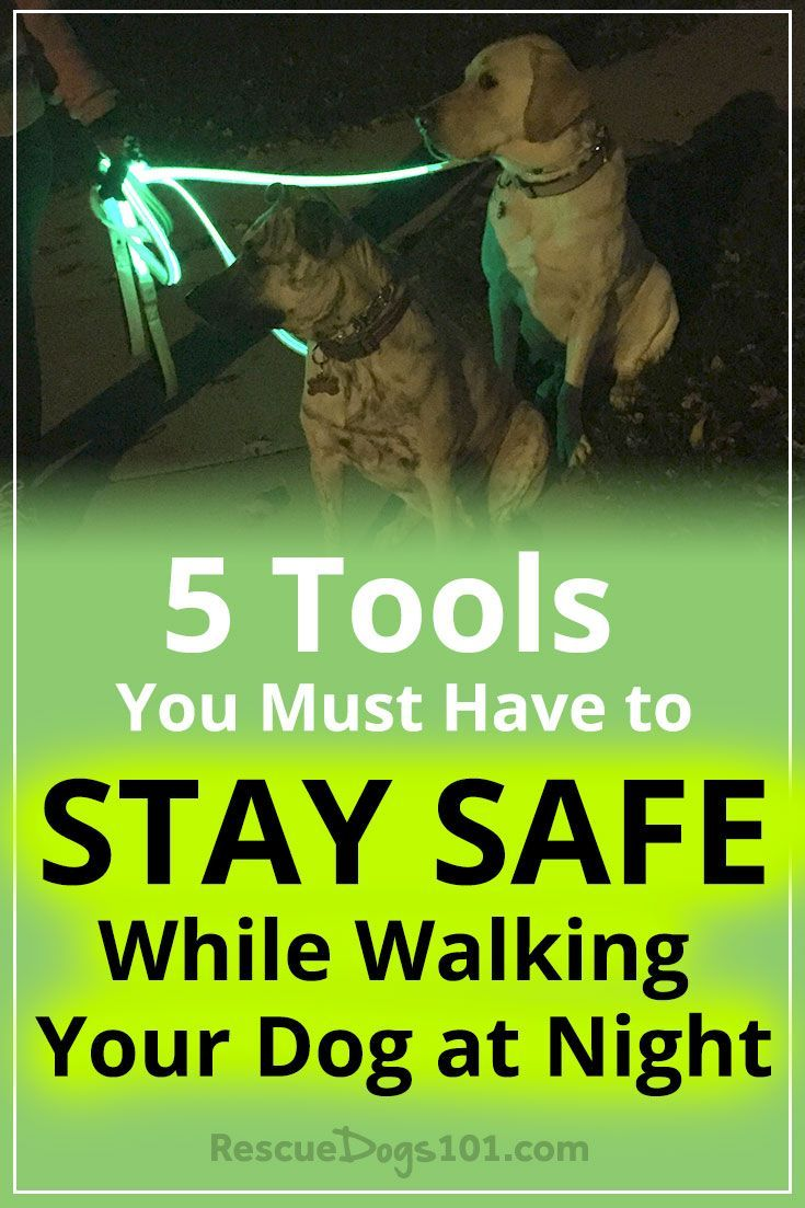 Do You Walk Your Dog At Night Boxer Dogs Dog Care Tips Dog
