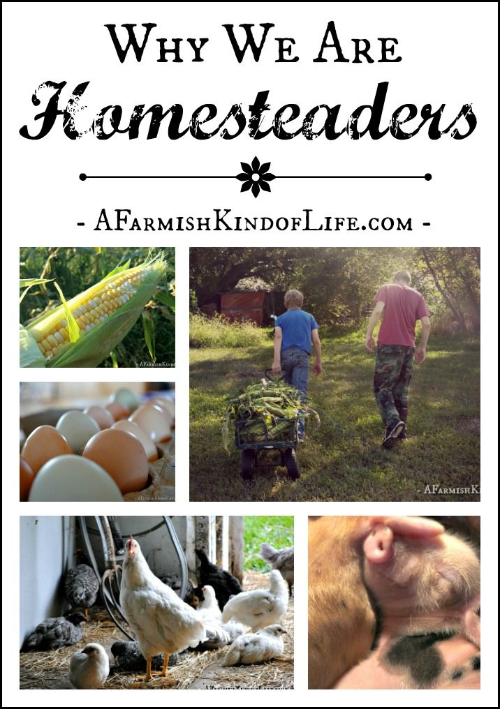 Why We Are Homesteaders: 28 Reasons - A Farmish Kind of Life