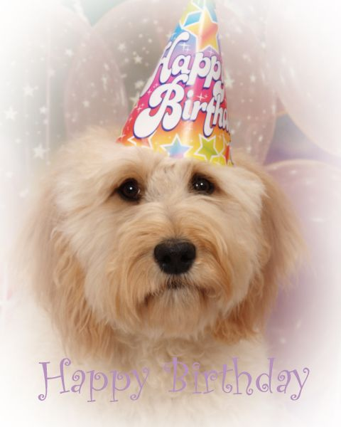 Goldendoodle Birthday Goldendoodles Amp Dogs I Love