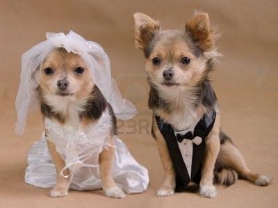 hondjes bruidspaar