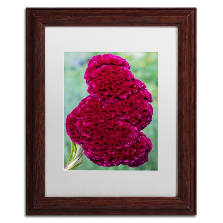 Kurt Shaffer 'Coxcomb Flower' Matte, Wood Framed Wall Art