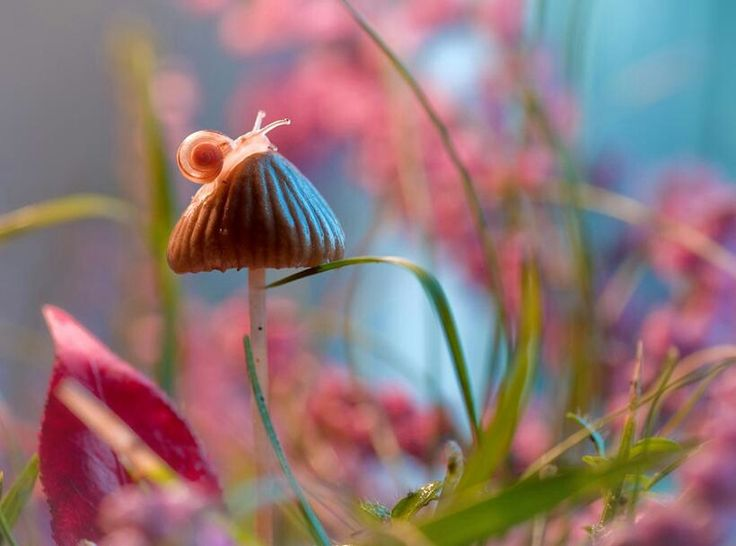#UNIQUE #photos #ART #cool #beauty #smile #colors #landscape #water #nature #artist #love #quotes #against_childlabor #FAISALSOLUTIONS #Autumn #air_show #Italian #friends #dogs #horse's #bird's #butterflies #flowers #roses #cat's #animals #mountains #seas