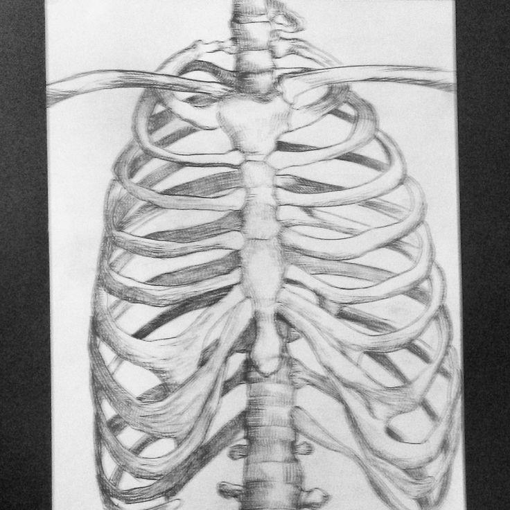 human chest